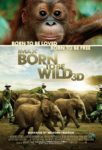 Born to Be Wild 3D