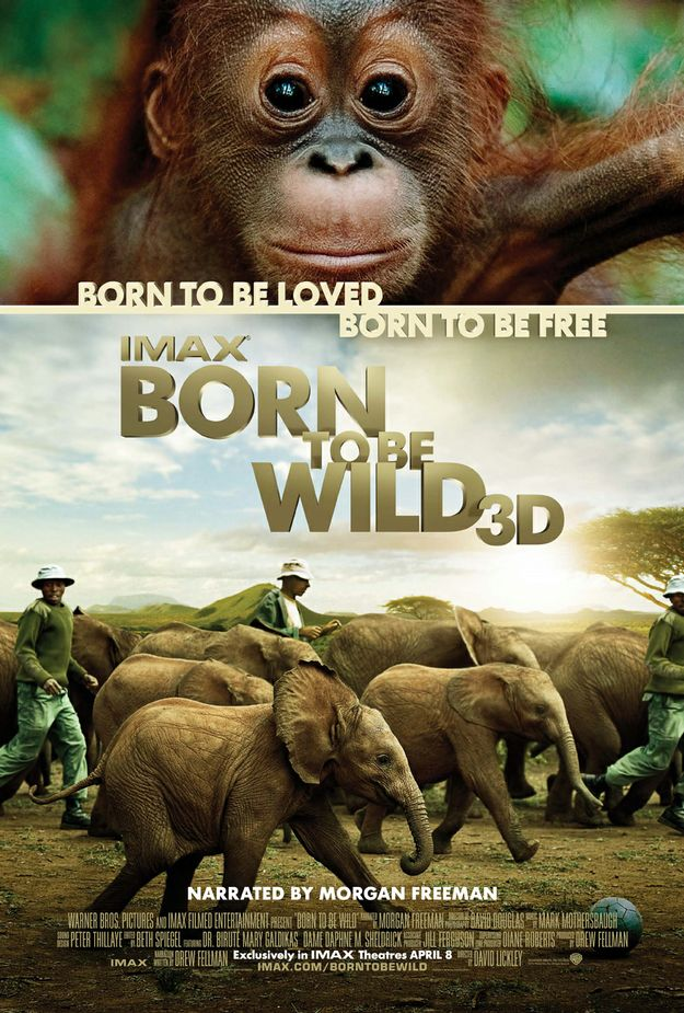 the wild french dvdrip xvid lrd